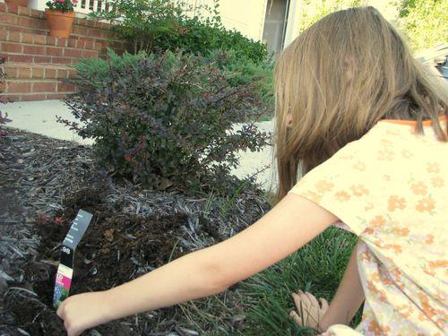 H planting