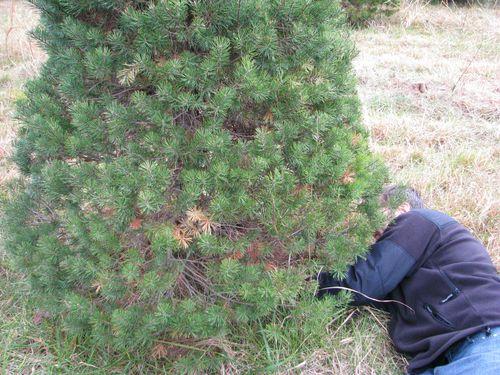 Glenn cutting tree