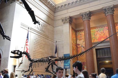 Dinosaur 2 Natural History Museum