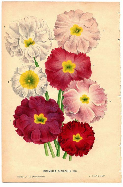 1a-botanicalflowers-graphicsfairy006e