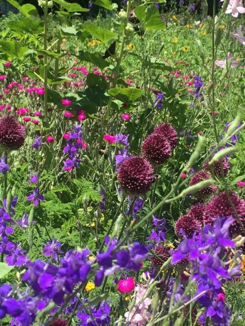Mount vernon garden - leslie